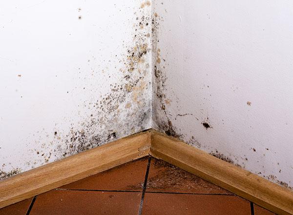 Traitement de l'humidité : maison envahie par la moisissure